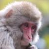 関東近郊「動物園と遊園地」子供も大人も嬉しい 無料で楽しむレジャー施設 群馬県桐生市「桐生が丘岡動物園・遊園地」